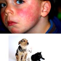 Аллергия на животных, собак,кошек у детей