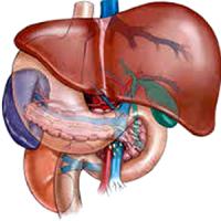 Лечение Печени и Поджелудочной Железы