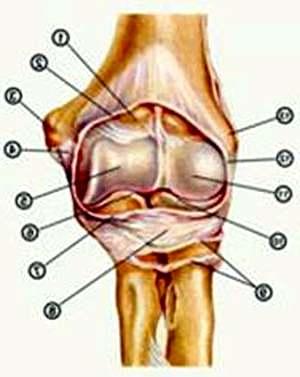Болят икры ног причина лечение народными средствами